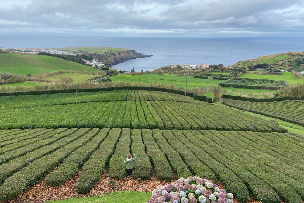 Chá Gorreana Açores © Mar de Sal